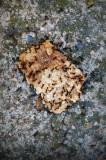 hormigas y texturas