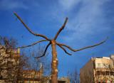 arachnid tree