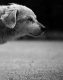 el mejor perro del mundo
