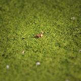 la hoja y el insecto