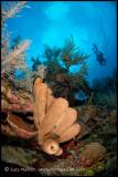 Brown Sponges