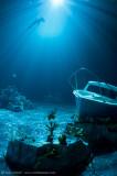 Ocean Optics fake reef