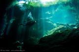 Kukulkan Cenote 12