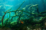 Eden Cenote fish