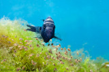 Eden Cenote Cichlid Fish & babies