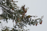 Montana POTD 2011