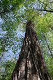 Owen Sowerwine Natural Area