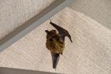 Bats, Egads!