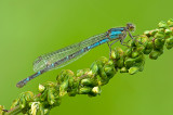 dragonflies_and_damselflies