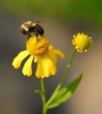 Bee's !!
