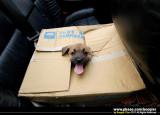 ¥|°¦³Q±ó¾iªº¤pª¯¡A«á¨Ó¥þ¼Æ³Q»{¾i / Rescued  4 abandoned puppies