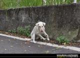 ¡i±Ï´©¾D®·Ã~èh§¨¨ìªºª¯¡A²¬Â¡«áì¦a³¥©ñ / Rescued a leg-Injury dog¡j