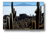 Ile des pêcheurs- Uyuni