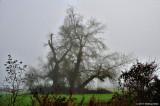 Tree In Foggy Field