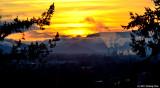 Springfield Sunrise