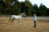 Carol's Horse