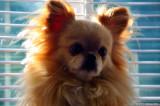 Miko The Lion