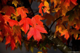 The Color Of Autumn