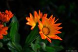 November Flower