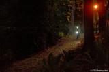 Biking Through The Park In The Dark