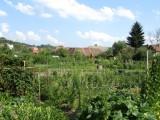 ...where urban farms grow produce for the city's restaurants