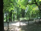 taking a leafy walk...