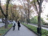 walking down the tree-lined cliff-top Prymorsky blvd
