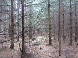 ...as well as to a variety of woodlands