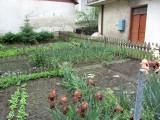 this garden on Ivan Franko street yielded many large stones