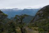 View towards Waiototo Range from bushline