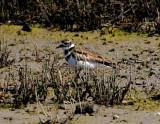 San Francisco Bay Wetlands
