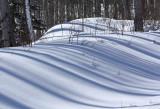 Snow Shadows2.jpg