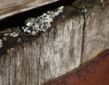 Barrel Moss2.jpg