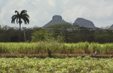 Farming Cuba.jpg