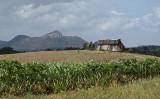Farming Cuba2.jpg
