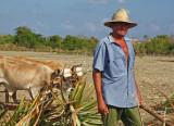 Farming Cuba3.jpg