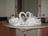 Swans in a sink.jpg