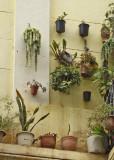 Hanging Garden2.jpg