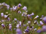 Spring Flowers4.jpg