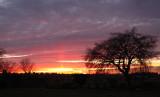 Forest Lawn Sunset2.jpg