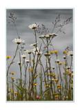Roadside Flowers2.jpg
