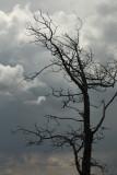 Stormy Skies.jpg