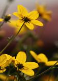 Garden Flowers.jpg