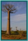 Madagascar 2004