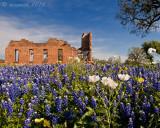 Texas Wildflowers 2012