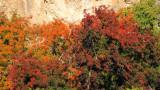 Fall Color at Boyce Thompson Arboretum