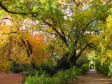 Main Trail by the Pistachio Grove in Autumn