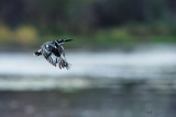 Magic Fly from Kingfisher