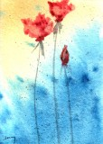 Roses     8-11