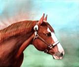 Moe, watercolor - 8 x 9